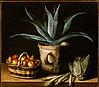 Still Life with Aloe Vera